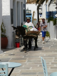 images%20cyclades%202014/09%20miniature.jpg
